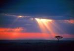 Masai Mara Sunrays and tree, Kenya