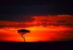Sunset on Serengeti Masai Mara Preserve Kenya