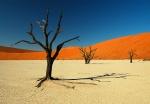 Dead Vlei Dry Lakebed, Sossusvlei Area, Namib Desert, Namibia