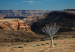 Fish River Canyon and Kokerboom Tree, Namibia
