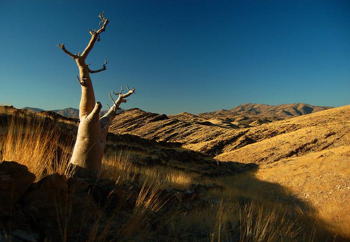 Strange Tree and Strange Landscape, Kuiseb Hills, Namibia