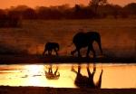 Elephant Mother and Calf at sunset, Dom Waterhole, Hwange National Park, Zimbabwe.