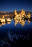 Mono Lake tufa towers reflection and dead bush vertical