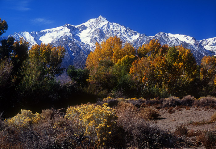 Mt Williamson and fall colors, Owen Valley, California
