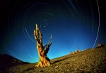 Star Circles and Bristlecone Pine