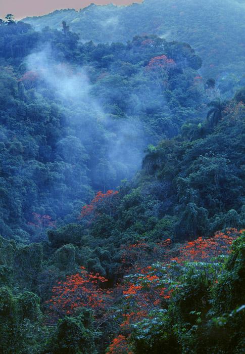 El  Yunque jungle, Puerto Rico