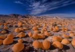 "Pumkin Patch ""enhanced"", with orange pumpkins, Ocotillo Wells"
