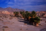 Seventeen Palms Oasis, Anza Borrego