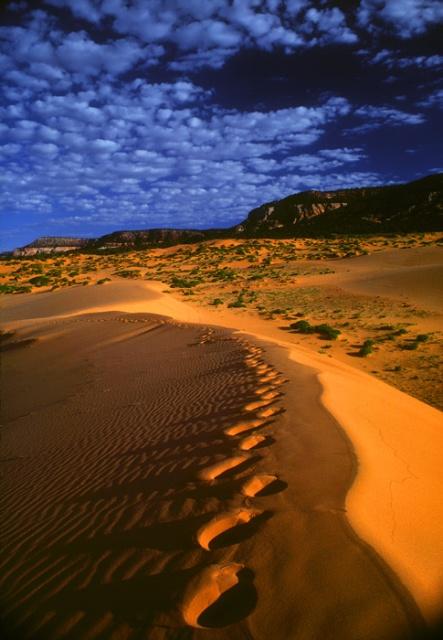 Footprints on dune, Coral Pink Sand Dunes, Utah