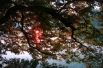 Sunset through tree branches, Lake Bled, Slovenia