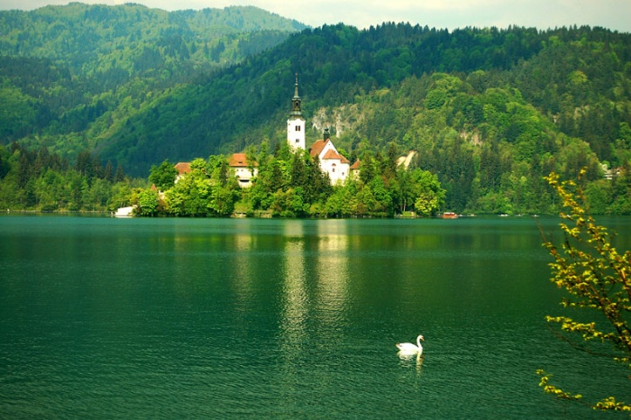 Lake Bled Island and Swan, Slovenia