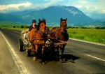 Horsecart, Transylvania