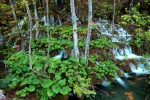 Falls in forest, Plitvice National Park, Croatia