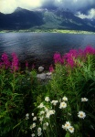 Flowers and Romsdal Fjord, Norway