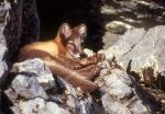 Arctic fox cub laying down, Spitzbergen