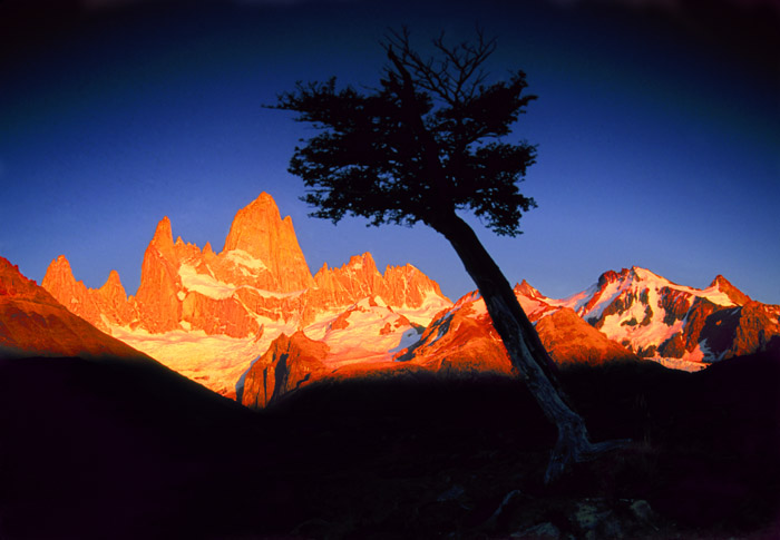 Sunrise on Fitzroy and tree, Patagonia, Argentina