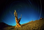 Star circles & bristlecone pine, White Mountains, California