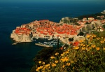 View of Dubrovnik with yellow flowers, Croatia