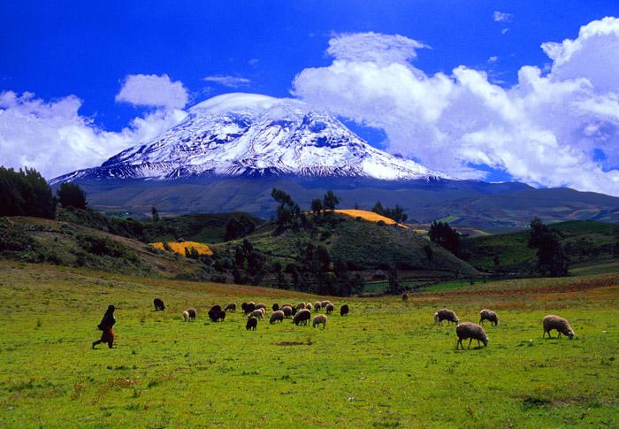 Chimborazo and sheep, Ecuador