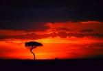 Serengeti Sunset, lone tree, Masai Mara, Kenya