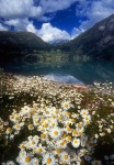 Stryn Lake and flowers, Norway