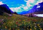 Hidden Lake Pass Wildflowers Glacier National Park Montana