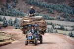 Tibet, Woodcutters