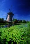 Windmill and lily pads, Kinderdjik, Netherlands