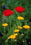Wildflowers Near Serpa Portugal